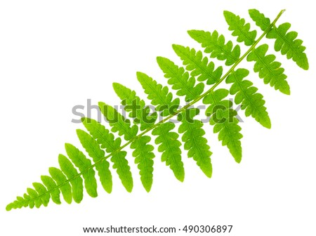 leaf fern isolated on white background in macro lens shooting