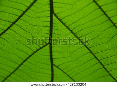 Leaf Green Close up / Green Leaf Macro Close-up, Leaf Detail - stock photo