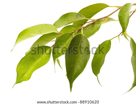 leaf green on a white background - stock photo