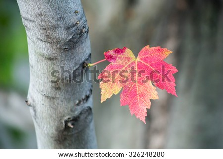 Leaf in the fall - stock photo