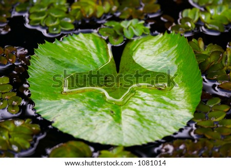 Leaf in the water - stock photo
