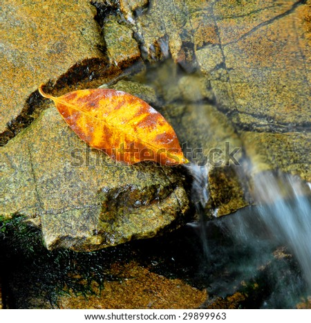 leaf is caught flowing over the boulders - stock photo
