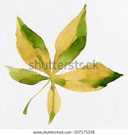 Leaf isolated on white. Watercolor. - stock photo