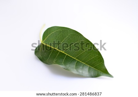 leaf leaves green background tea wall isolated plant line macro texture summer abstract