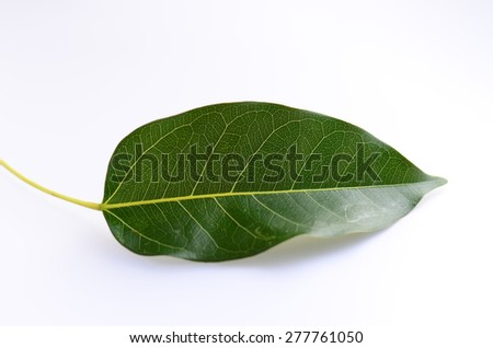 leaf leaves green wall background isolated texture line - stock photo