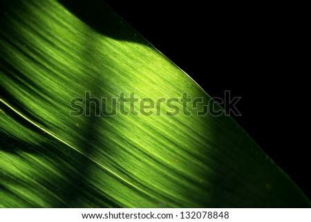 Leaf & Light - stock photo