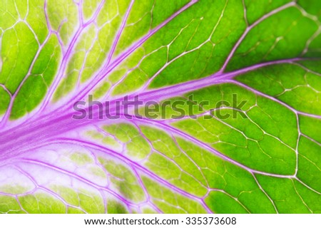 leaf macro background - stock photo
