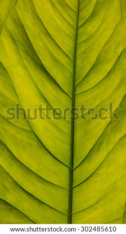 Leaf macro shoot. - stock photo