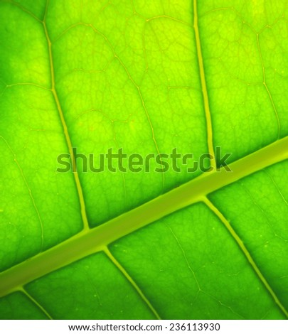 leaf of a plant close up - stock photo