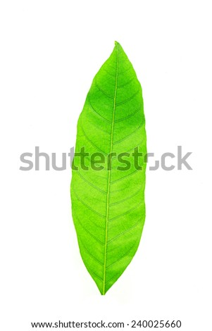 Leaf of a plant close up