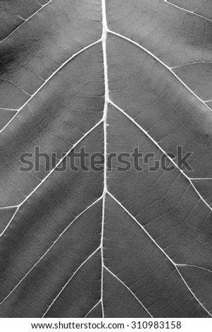 Leaf of a plant close up, Black and white - stock photo