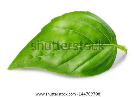 Leaf of basil isolated on white background - stock photo