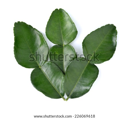 leaf of bergamot (kaffir lime) on white background - stock photo