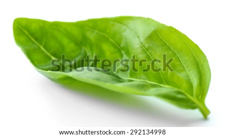 Leaf of green fresh basil isolated in white