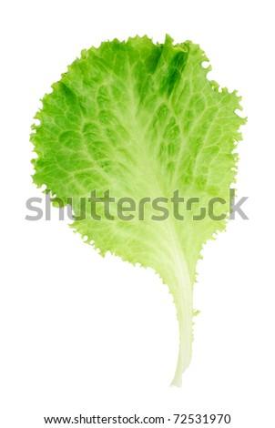Leaf of lettuce isolated on white background - stock photo