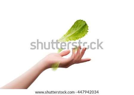 Leaf of lettuce salad in female hand on a white background - stock photo