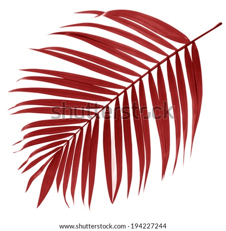 leaf of palm tree on white background - stock photo
