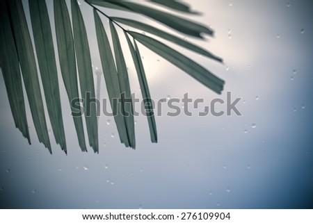 leaf on glass in rainy season background - stock photo
