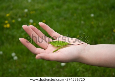 Leaf on hand , green background.