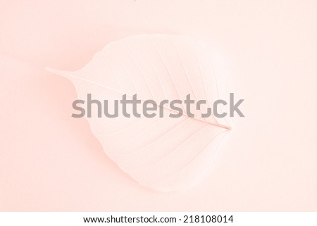 leaf on pastel background