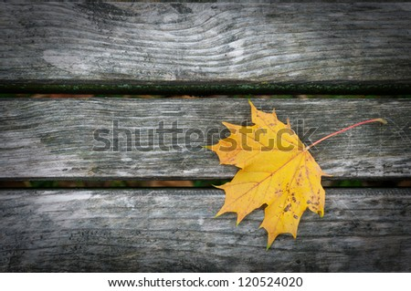 Leaf on the tree planks with vignette - stock photo