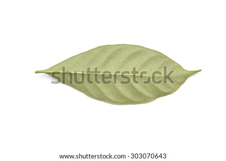 leaf on white background