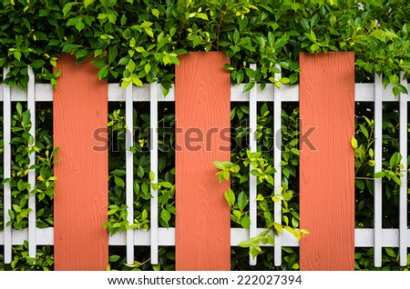 Leaf plant over fence - stock photo