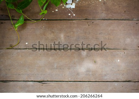 Leaf plant over wood plank brown texture background - stock photo
