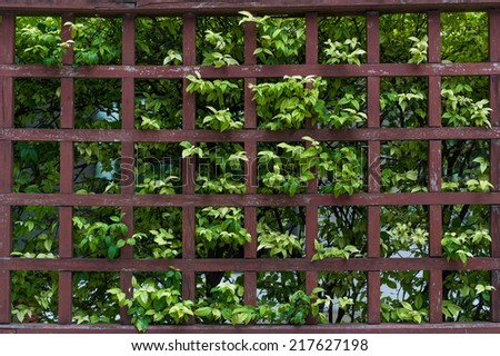 leaf plant with wood fence  - stock photo