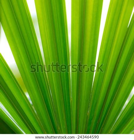 leaf texture  - stock photo