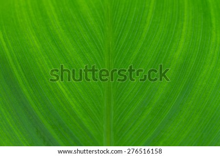 leaf texture - stock photo