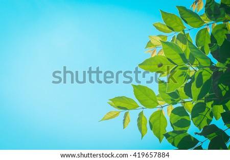 leaf texture blue background - stock photo