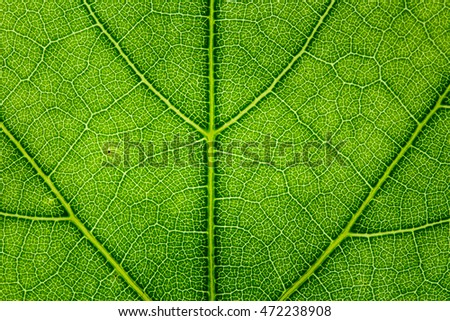 Leaf texture close up abstract background.