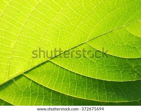 leaf texture closeup - stock photo