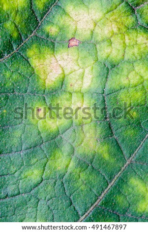 Leaf texture for background