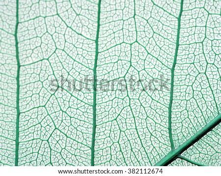 Leaf texture for pattern and background.