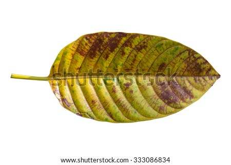Leaf texture isolated on white,  Clipping path - stock photo