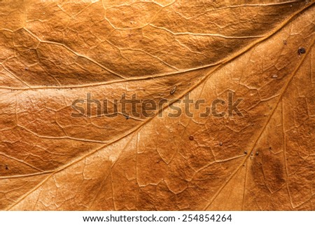 Leaf Texture/ Leaf Texture - stock photo