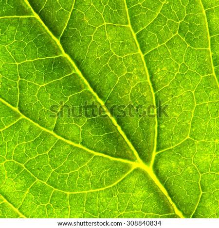 Leaf Texture./Leaf Texture.  - stock photo