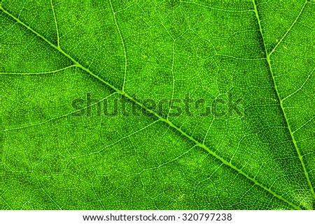 Leaf Texture./ Leaf Texture. - stock photo