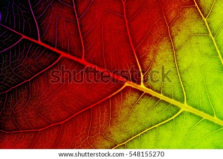 Leaf texture or leaf background for design with copy space for text or image. Leaf motifs that occurs natural. Color effect