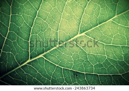 leaf texture, Retro stale - stock photo