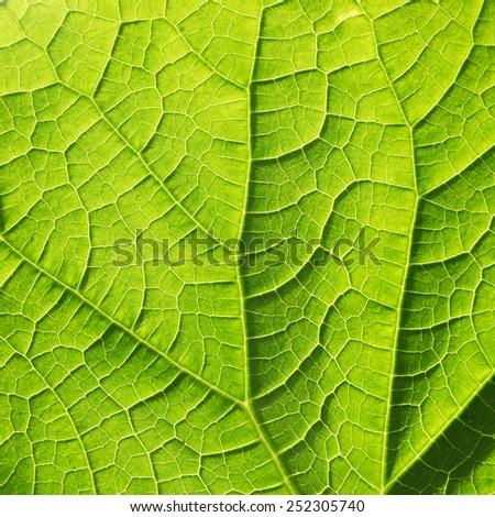leaf texture, soft focus blur - stock photo