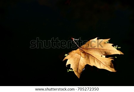 Leaf tree over the lake