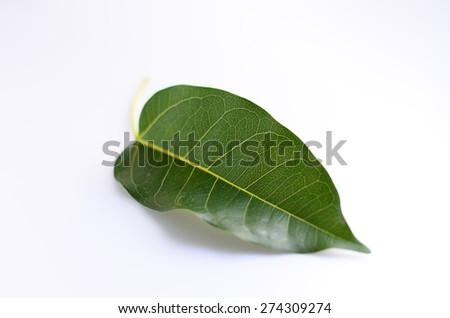 leaf wall background white green isolated leaves nature life organic fresh - stock photo