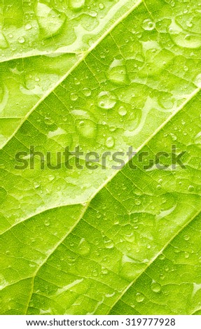 Leaf with drops of water close up