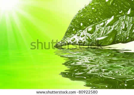 Leaf with drops reflex in the water - stock photo