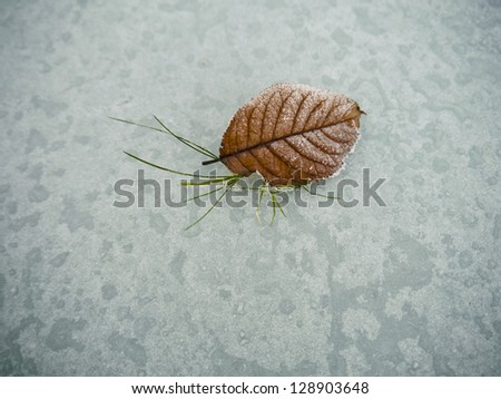 Leaf with Legs - stock photo