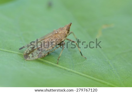 Leafhopper on the leaf  - stock photo