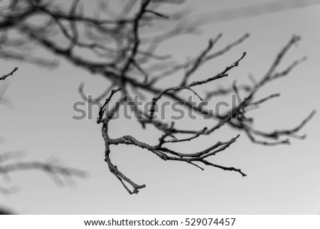 Leafless branches close up